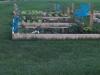 thumbs_inglewood-community-garden-aug-5-2012-b